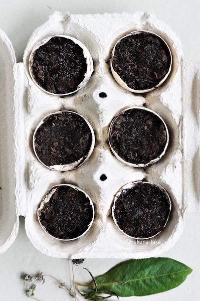 Faire des semis dans coquilles d'oeufs